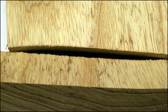 A close-up of swamp ash grain